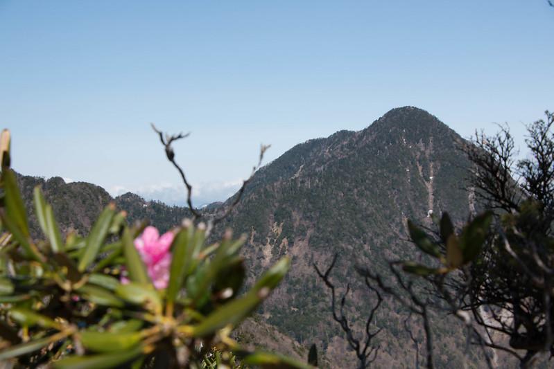 皇海山とシャクナゲ
